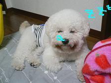 2006_1210a0007.JPG