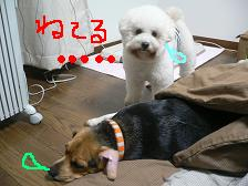 2006_1210a0008.JPG