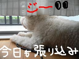 画像 646.jpg