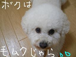 コピー (2) 〜 画像 283.jpg