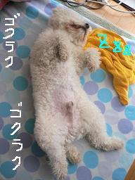 コピー 〜 コピー 〜 画像 082.jpg