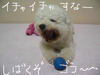 コピー 〜 コピー 〜 画像 719.jpg