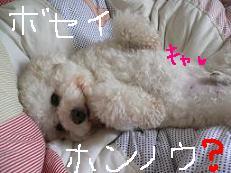 コピー 〜 画像 024.jpg
