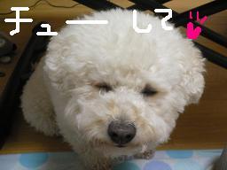 コピー 〜 画像 109.jpg