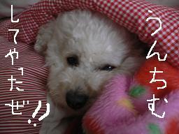 コピー 〜 画像 306.jpg