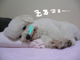 コピー 〜 画像 577.jpg