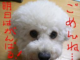 コピー 〜 画像 644.jpg