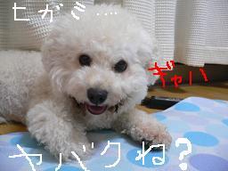 コピー 〜 画像 702.jpg