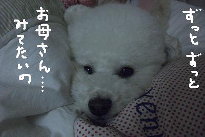 画像 060.jpg