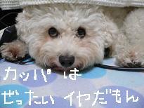 画像 1062.jpg