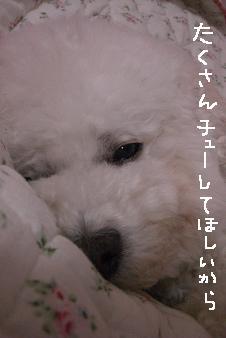 画像 12525.jpg