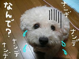 画像 4246.jpg