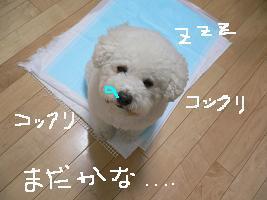画像 4833.jpg