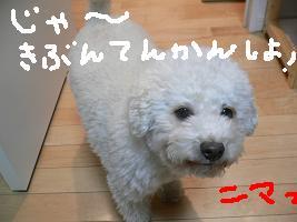 画像 5263.jpg
