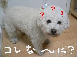画像 5269.jpg
