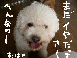 画像 5332.jpg