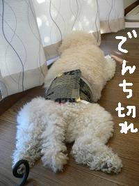 画像 5365.jpg