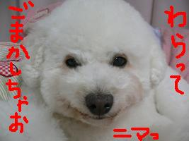 画像 5408.jpg