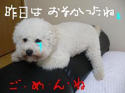画像 729.jpg