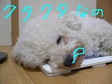 画像 825.jpg