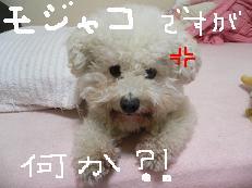 画像 864.jpg