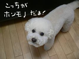 画像 9797.jpg