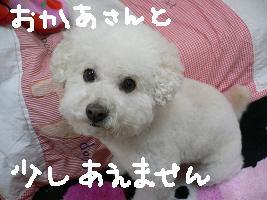 画像 9804.jpg
