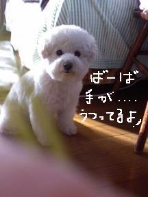 画像 9908.jpg
