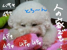 2006_1105a0014.JPG