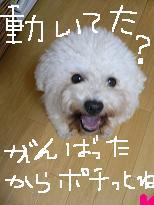 コピー 〜 画像 1040.jpg
