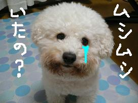 コピー 〜 画像 1335.jpg