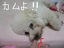 画像 970.jpg
